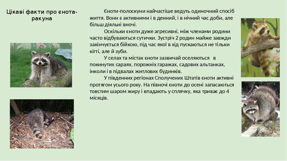 Цікаві факти про єнота-ракуна Єноти-полоскуни найчастіше ведуть одиночний спосіб життя. Вони є активними і в денний, і в нічний час доби, але більш...