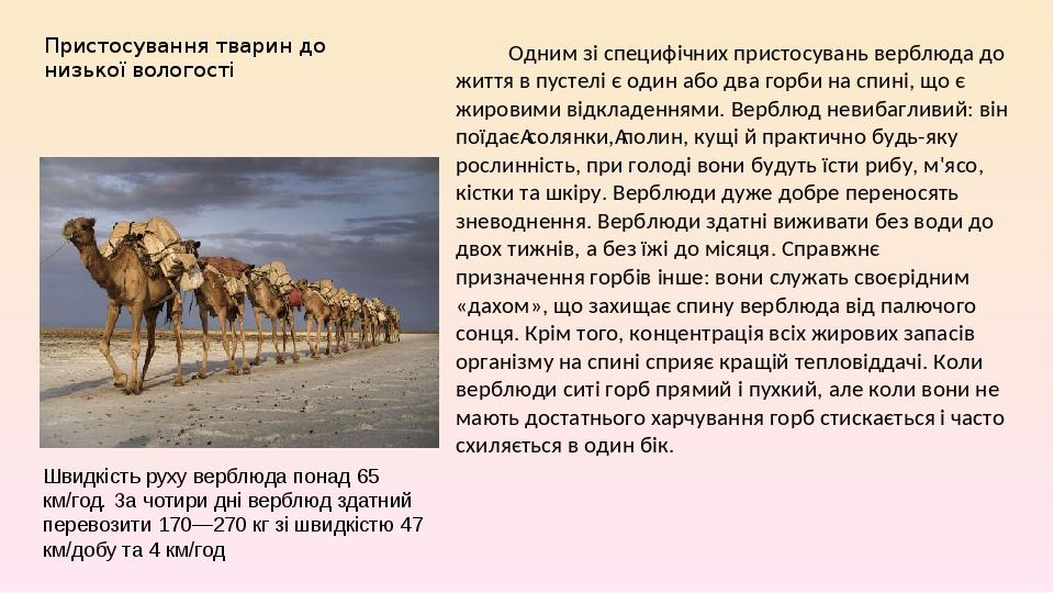 Пристосування тварин до низької вологості Одним зі специфічних пристосувань верблюда до життя в пустелі є один або два горби на спині, що є жировим...