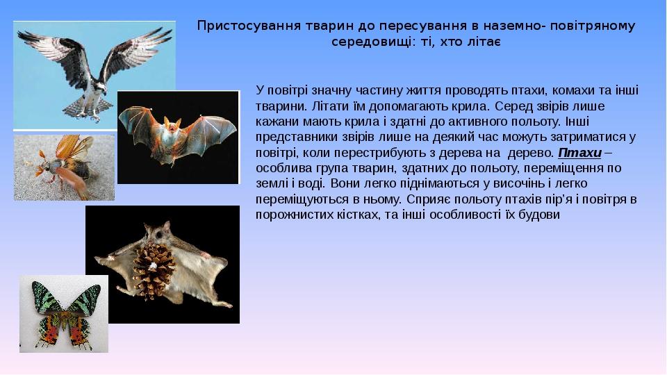 Пристосування тварин до пересування в наземно- повітряному середовищі: ті, хто літає У повітрі значну частину життя проводять птахи, комахи та інші...