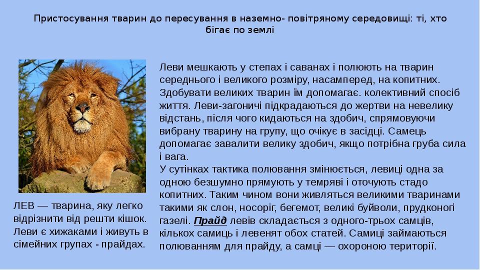Пристосування тварин до пересування в наземно- повітряному середовищі: ті, хто бігає по землі Леви мешкають у степах і саванах і полюють на тварин ...