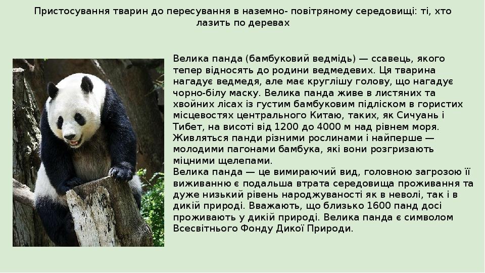 Пристосування тварин до пересування в наземно- повітряному середовищі: ті, хто лазить по деревах Велика панда (бамбуковий ведмідь) — ссавець, якого...