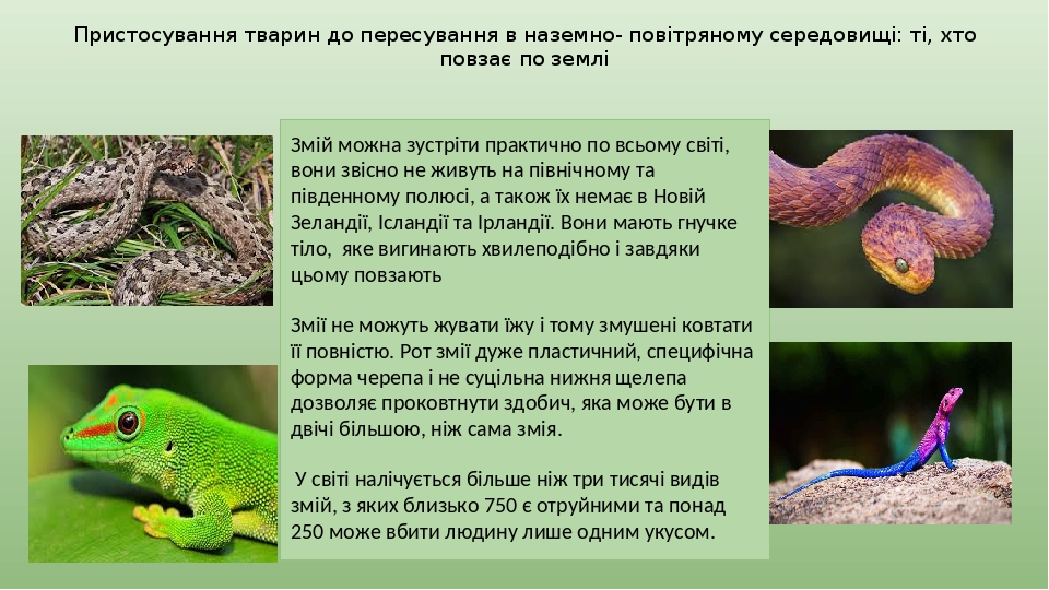 Пристосування тварин до пересування в наземно- повітряному середовищі: ті, хто повзає по землі Змій можна зустріти практично по всьому світі, вони ...