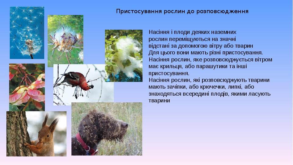 Пристосування рослин до розповсюдження Насіння і плоди деяких наземних рослин переміщуються на значні відстані за допомогою вітру або тварин Для ць...