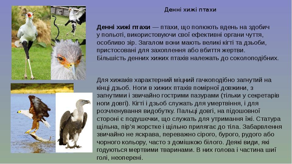 Денні хижі птахи Денні хижі птахи—птахи, що полюють вдень на здобич упольоті, використовуючи свої ефективні органи чуття, особливо зір. Загалом ...