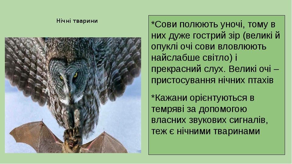 Нічні тварини *Сови полюють уночі, тому в них дуже гострий зір (великі й опуклі очі сови вловлюють найслабше світло) і прекрасний слух. Великі очі ...