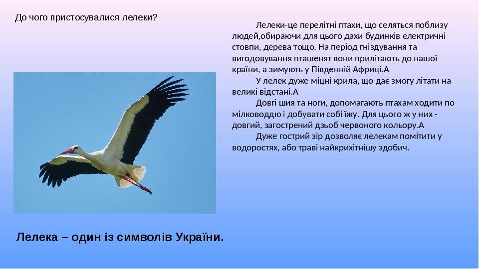 До чого пристосувалися лелеки? Лелеки-це перелітні птахи, що селяться поблизу людей,обираючи для цього дахи будинків електричні стовпи, дерева тощо...