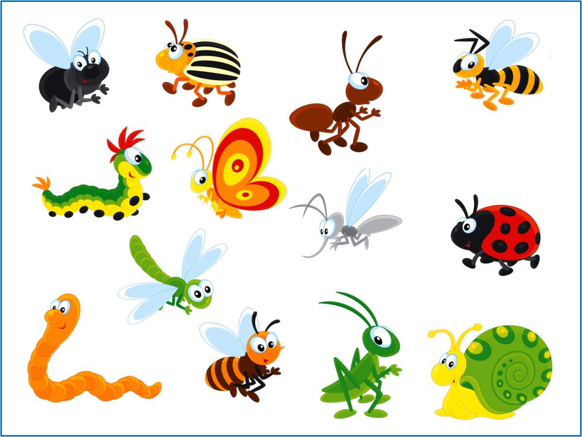 Ознайомлення з природним довкіллям «Про комах»